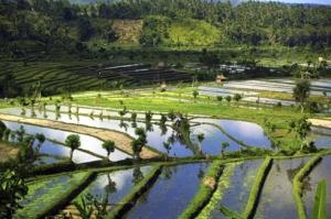 Paysage de Bali dans tourisme bali-01_virginie-de-galzain1